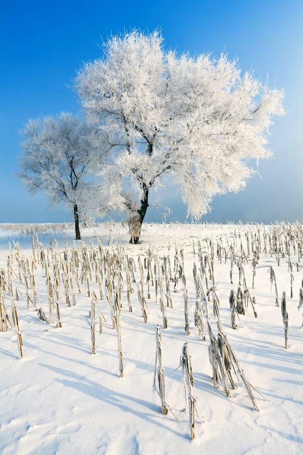 снежок смещений стоковая фотография