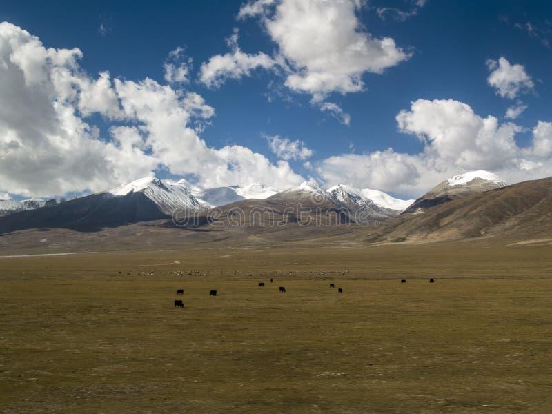 снежок Тибет горы стоковое изображение rf