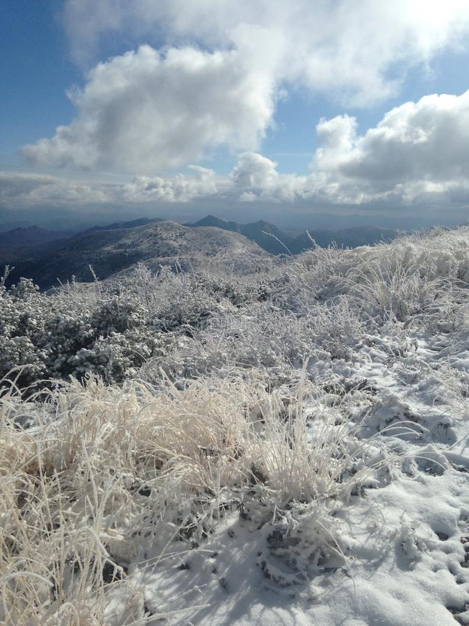снежок стоковое фото rf