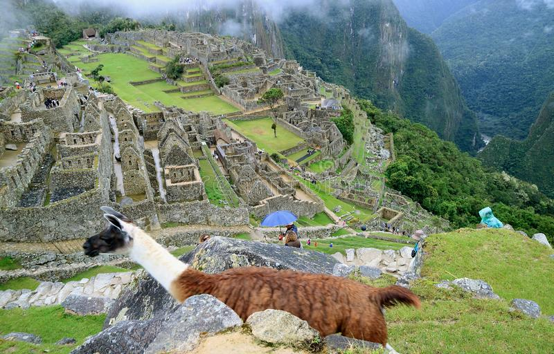 Сногсшибательный взгляд известного Machu Picchu с ламой в переднем плане, Перу стоковые изображения rf