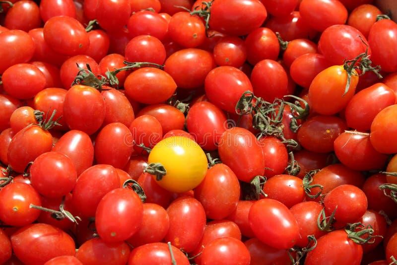 Сногсшибательные томаты на рынке стоковое изображение