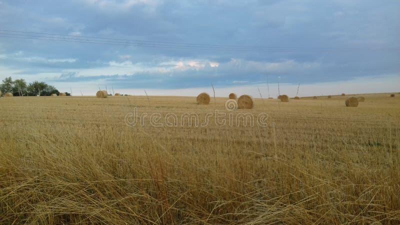 Снопы на поле стоковые фотографии rf