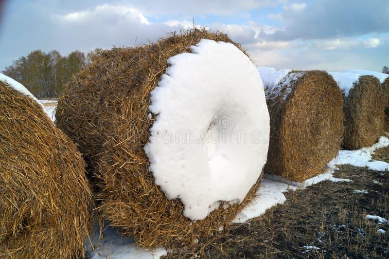 Снопы сена в поле стоковые изображения rf