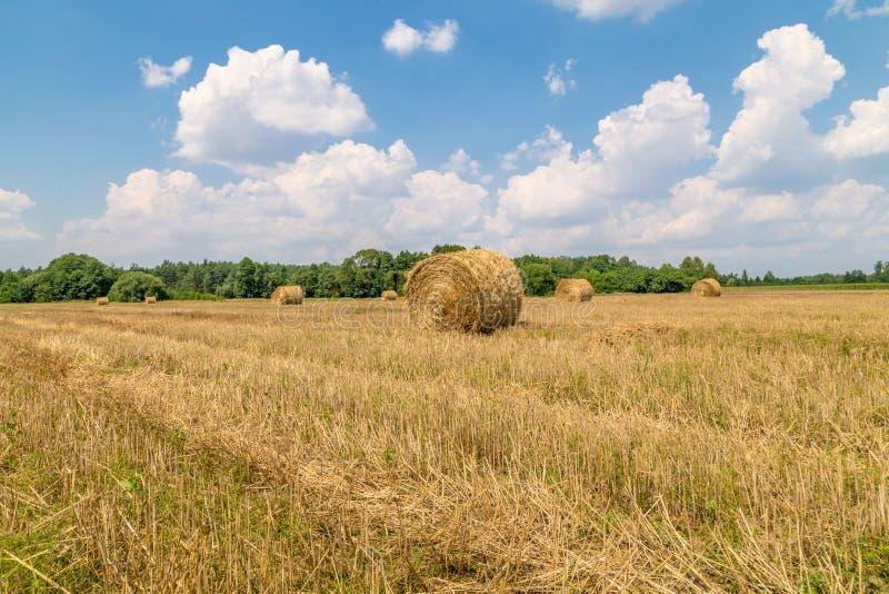 Снопы соломы на поле в сборе стоковая фотография rf