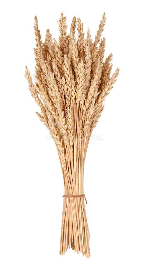 Сноп пшеницы стоковые фото