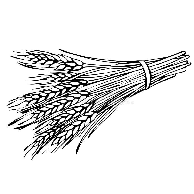 Сноп эскиза пшеницы стоковая фотография rf