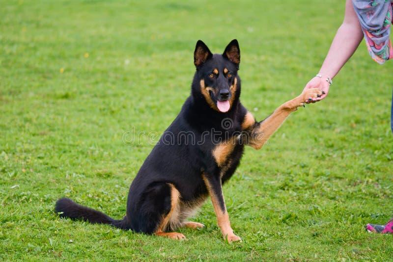 Собака давая лапку к предпринимателю стоковое изображение