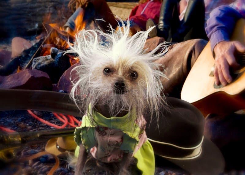 Собака лагерного костера стоковая фотография rf
