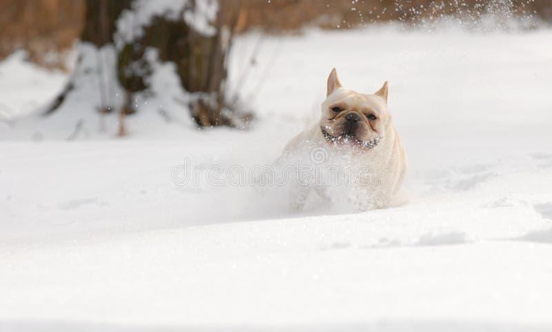Собака бежать в снеге стоковое фото rf