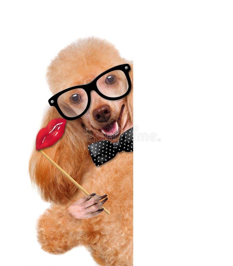 Download Собака битника стоковое изображение. изображение насчитывающей юмористика - 41659937