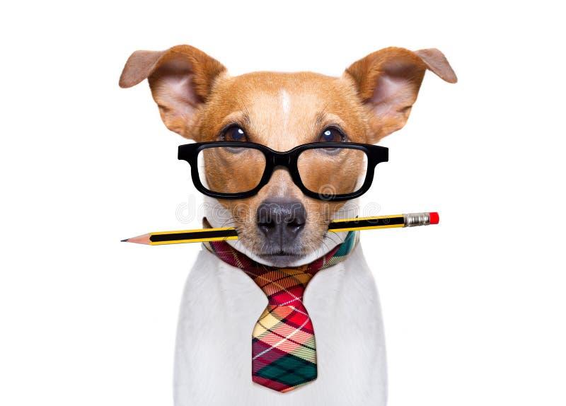 Собака босса работника офиса стоковые фото