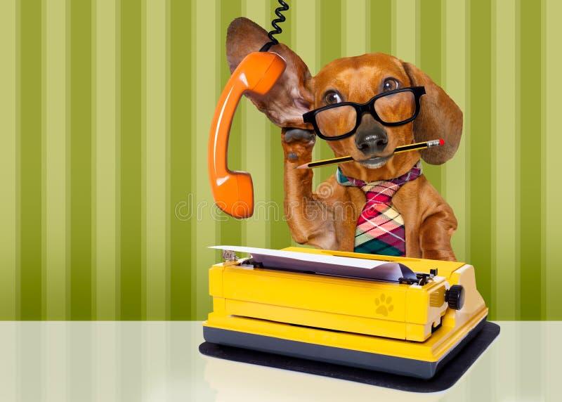 Собака босса работника офиса стоковые фотографии rf