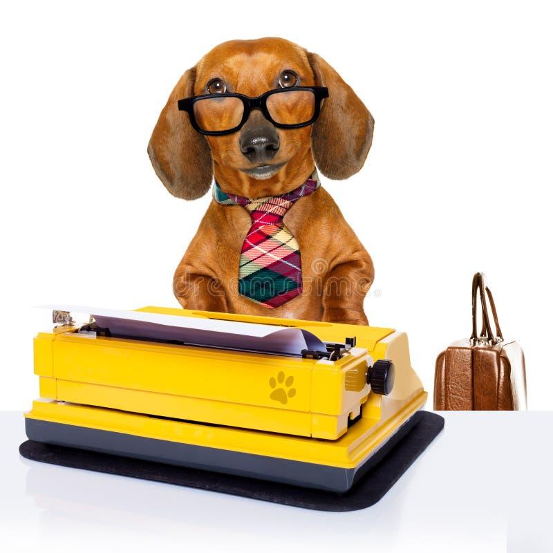 Собака босса работника офиса стоковые изображения