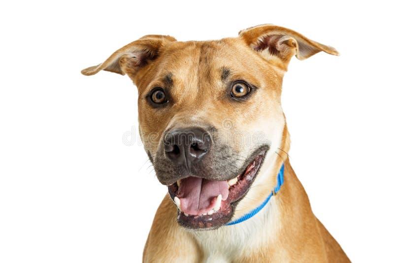 Собака Брайна конца-вверх счастливая усмехаясь стоковая фотография