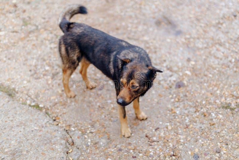 Собака Брауна ища свой владелец стоковая фотография rf