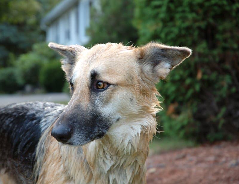 собака ванны стоковая фотография