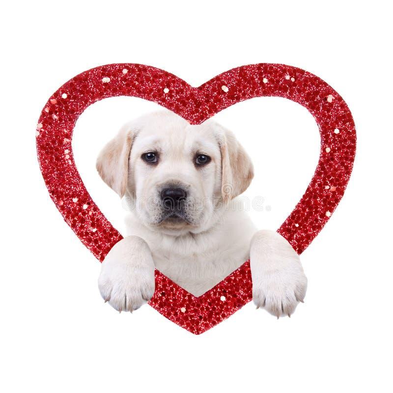 Собака валентинки стоковые изображения