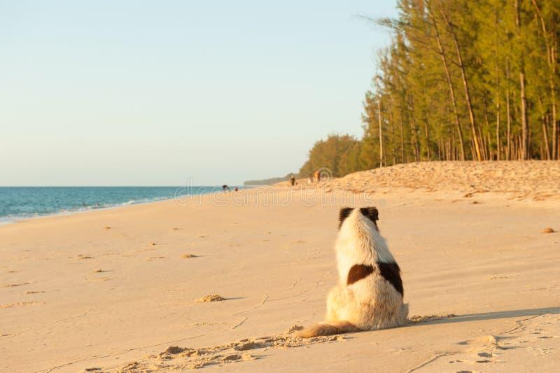 Собака видит туристов на пляже захода солнца стоковая фотография