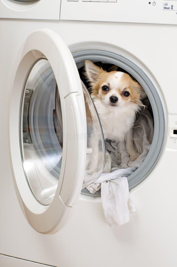 собака внутри запитка машины стоковые изображения