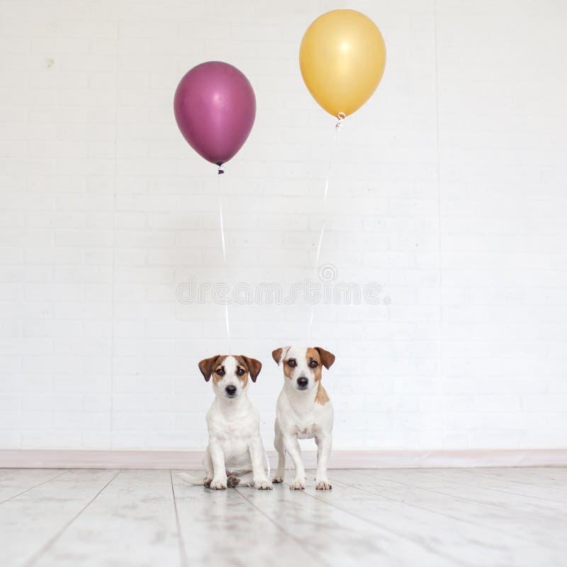 собака воздушного шара стоковое фото rf