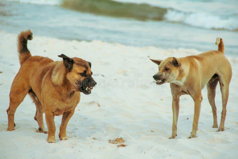 Собака воюя в пляже стоковое фото rf