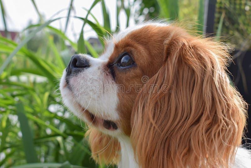 Собака вытаращиться стоковое фото rf