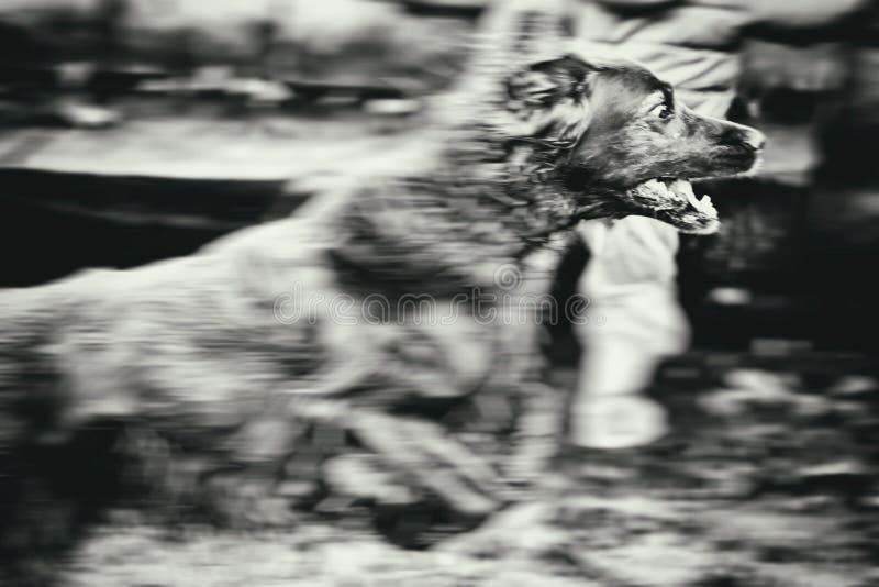 Собака в движении стоковое изображение rf
