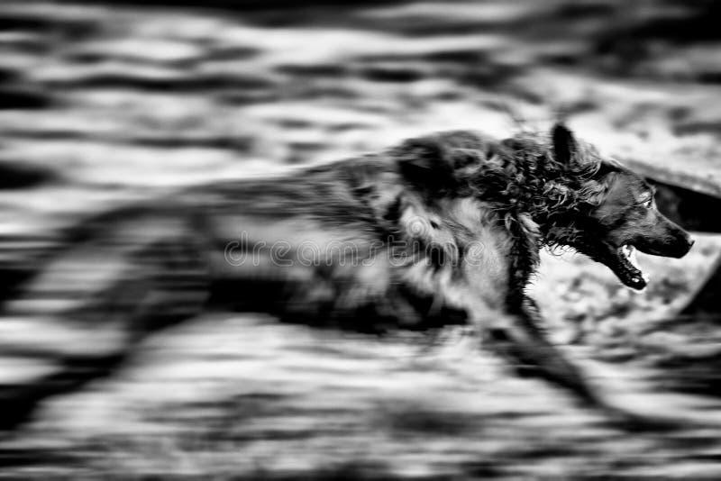 Собака в движении стоковые изображения rf