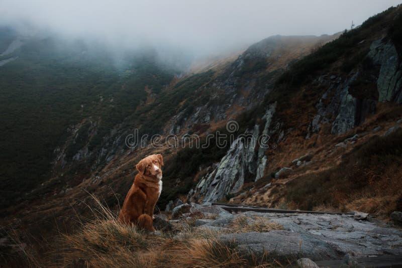 Собака в горах Путешествовать с любимчиком Здоровый уклад жизни стоковое фото rf