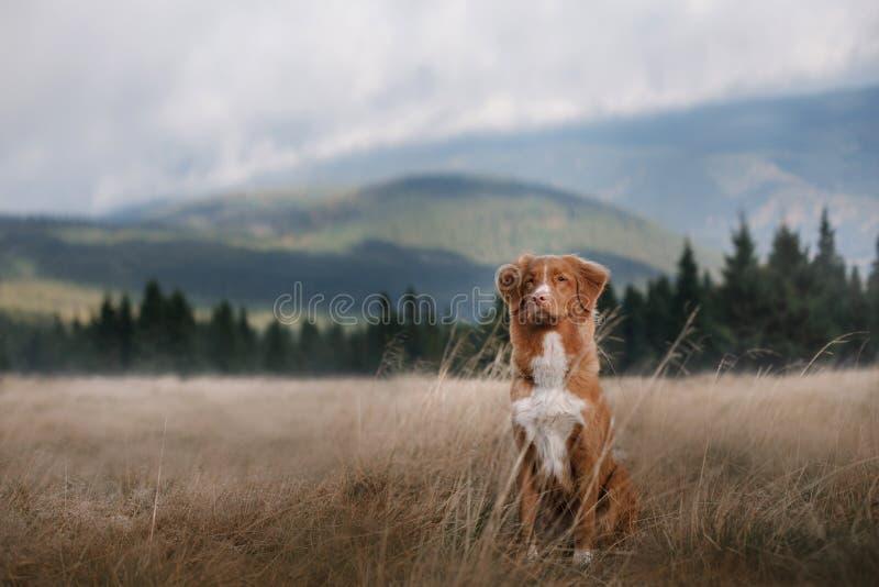 Собака в горах Путешествовать с любимчиком Здоровый уклад жизни стоковая фотография rf
