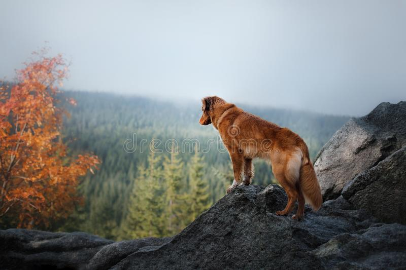Собака в горах Путешествовать с любимчиком Здоровый уклад жизни стоковые изображения rf