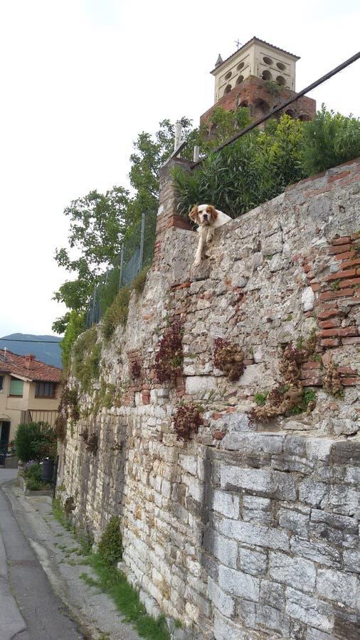 Собака в замке, Тоскане стоковые изображения rf