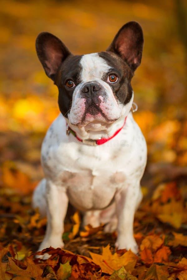 Собака в осеннем пейзаже стоковые изображения