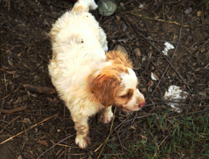 Собака в отчаянии стоковое фото