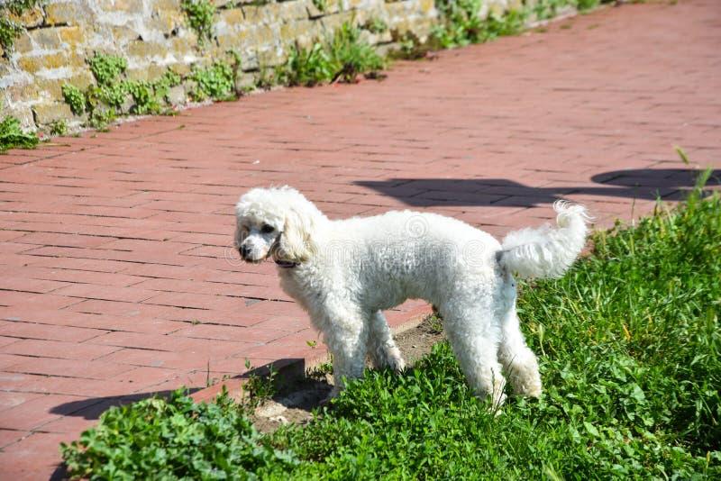 Собака в парке стоковые изображения