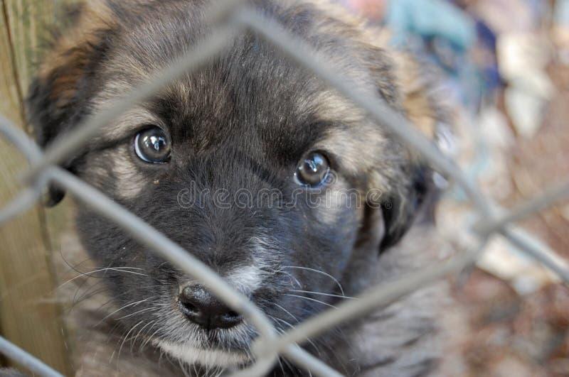Собака в приюте для животных стоковое изображение rf