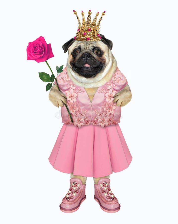 Собака в розовом платье и корона стоковое фото