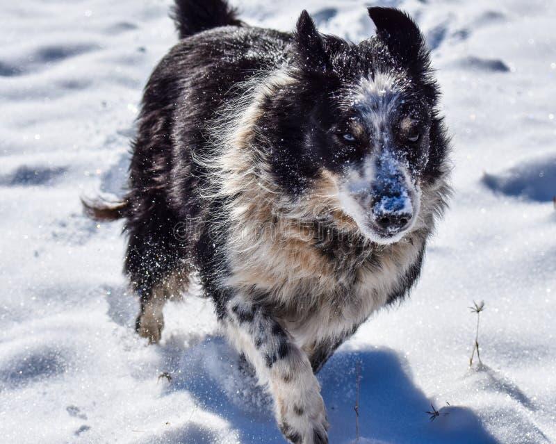 Собака в снежке стоковое фото rf