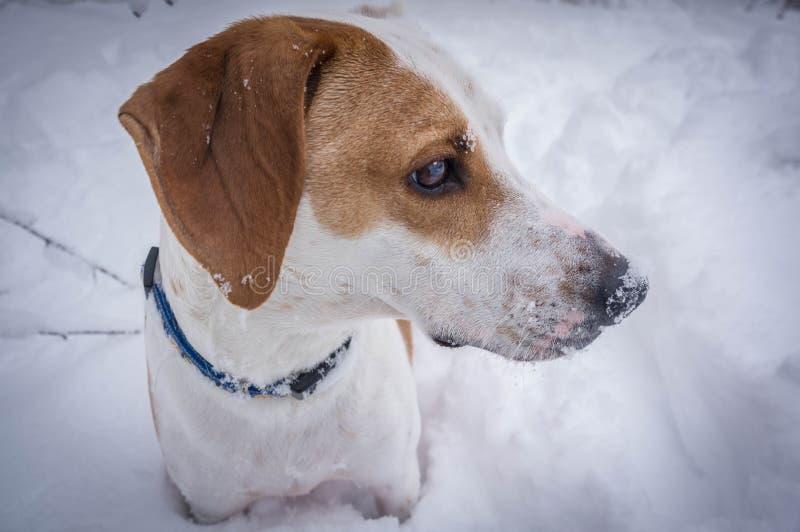 Собака в снежке стоковое фото