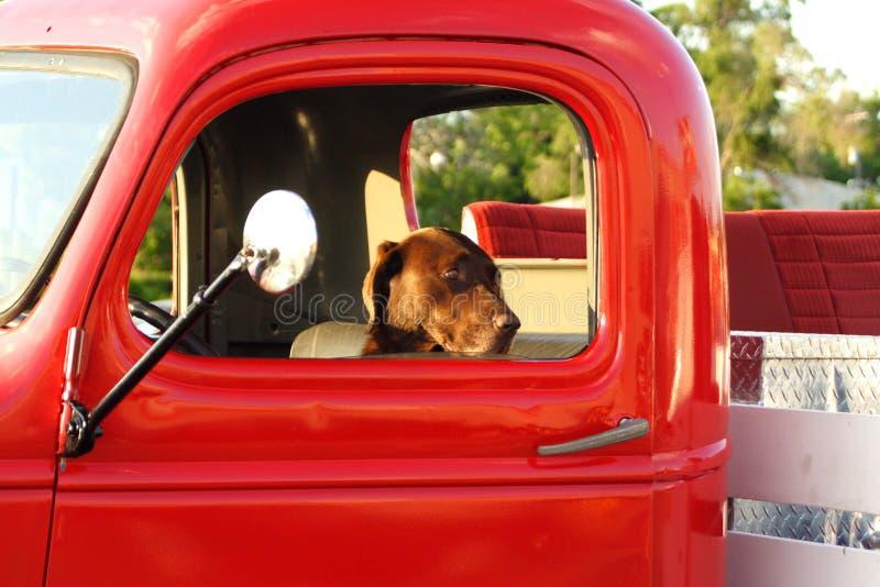 Собака в старой тележке стоковое изображение rf
