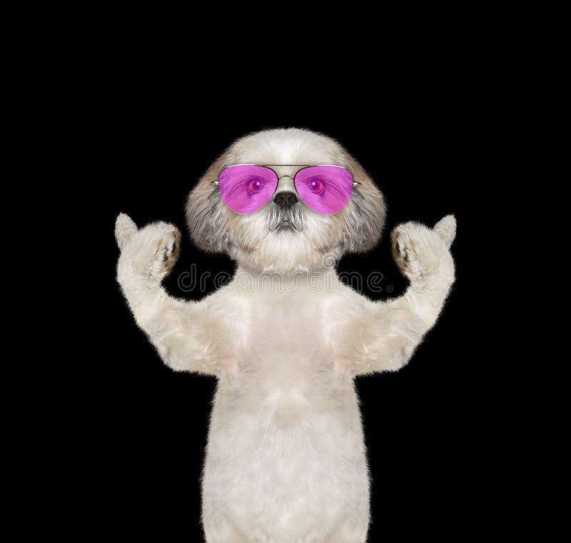 Собака в стеклах показывая большой палец руки вверх и гостеприимсва стоковое изображение rf