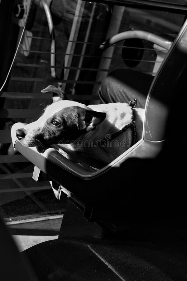Собака в шине стоковая фотография