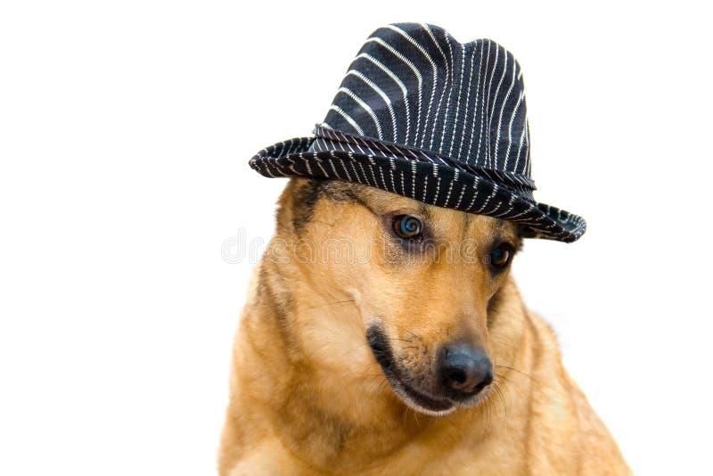 Собака в шляпе стоковое фото rf