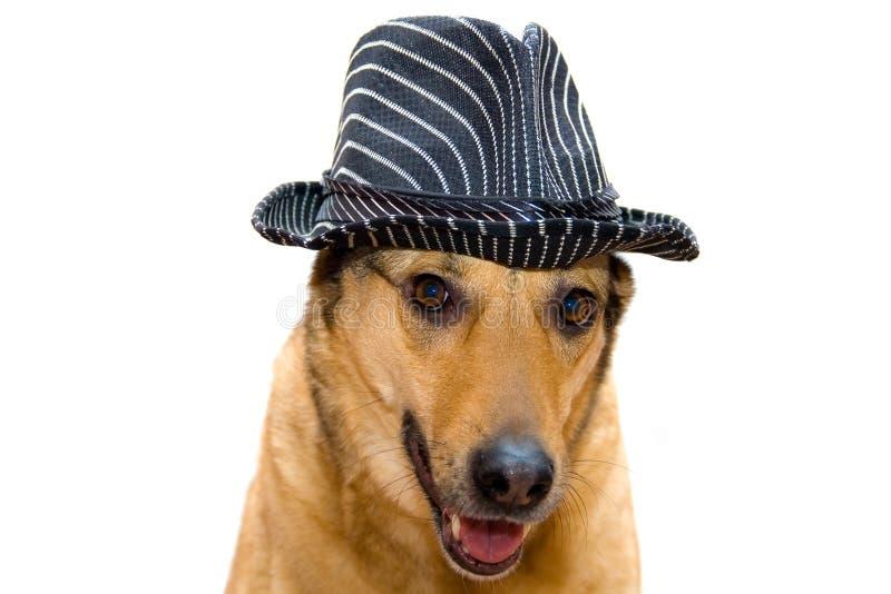 Собака в шляпе стоковая фотография
