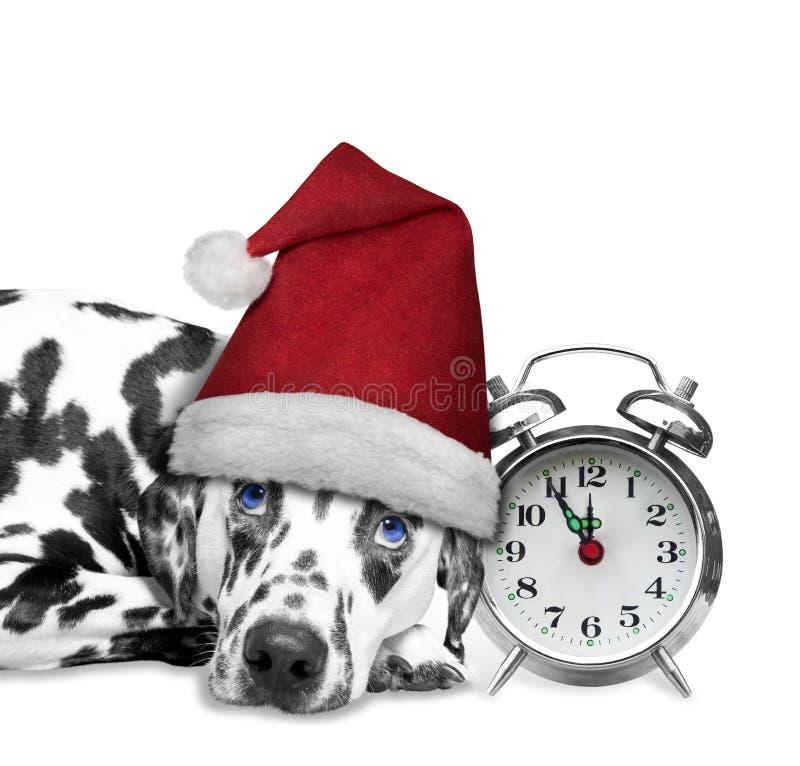 Собака в шляпе laiyng Санта Клауса около часов стоковое фото rf
