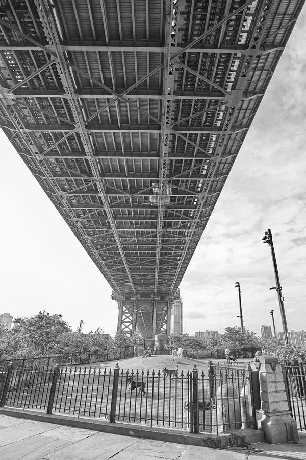 Собака главной улицы, который побежали под мостом Манхаттана стоковое изображение rf