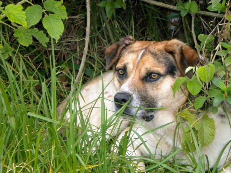 Собака, глядя далеко в природе стоковые фотографии rf