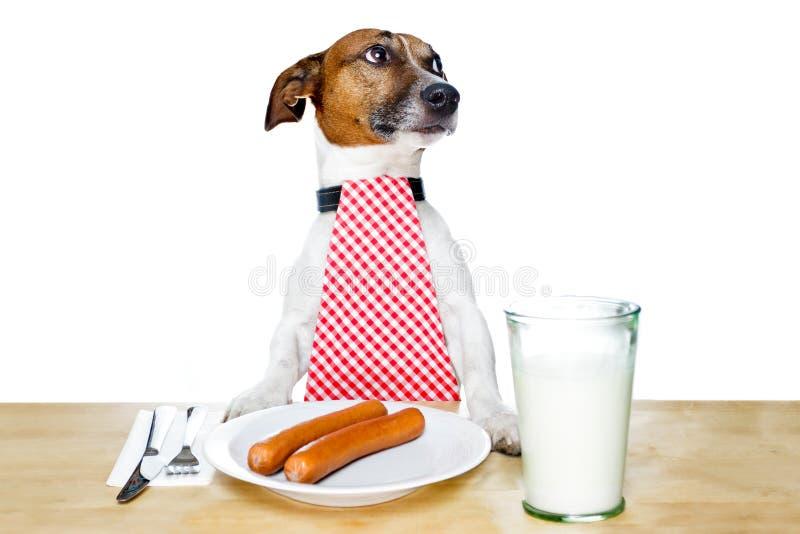 собака голодная стоковое фото