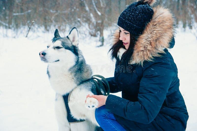 Собака дает лапке его мастера с невозмутимым пристальным взглядом стоковые фото