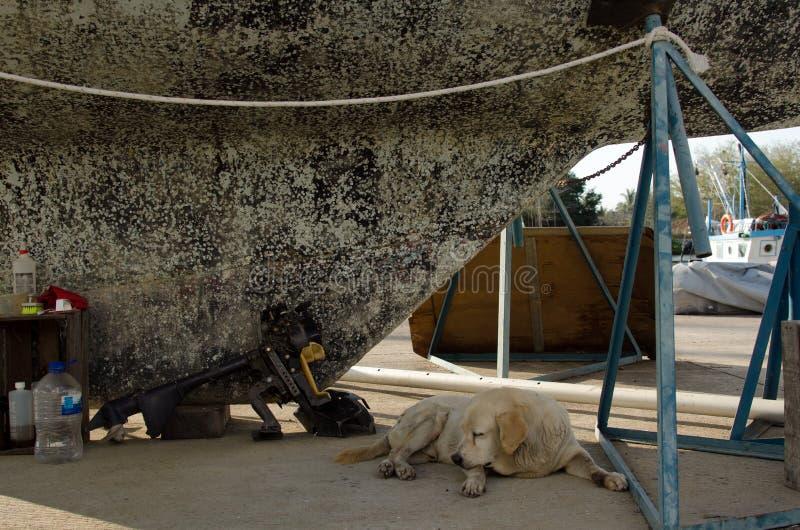 Собака двора шлюпки стоковая фотография